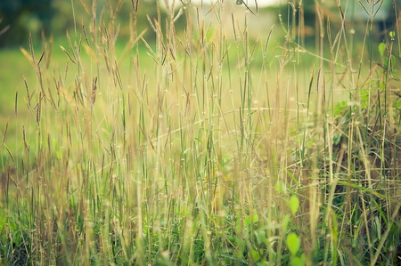 picture of The grass in the field vintage style Stock Photo