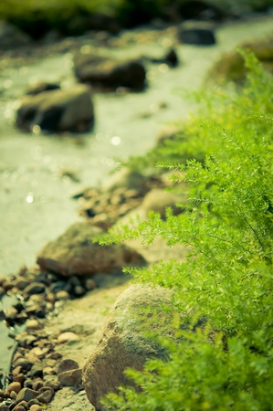 fern leaves with Stream in the morning photo