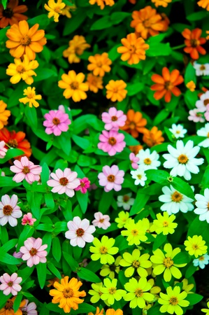 color of flower on the ground in garden Stock Photo