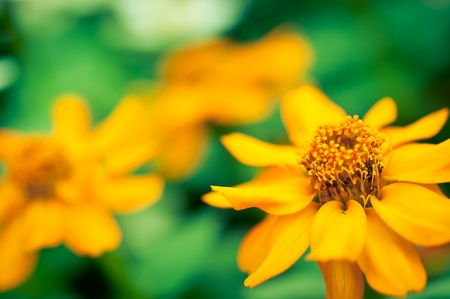 Beautiful yellow flower on unfocused green grass Stock Photo