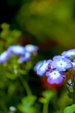 Beautiful violet flower with nature light in garden Stock Photo