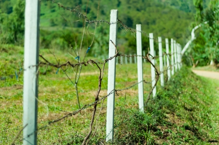 Old barb wire fence with grass in field photo