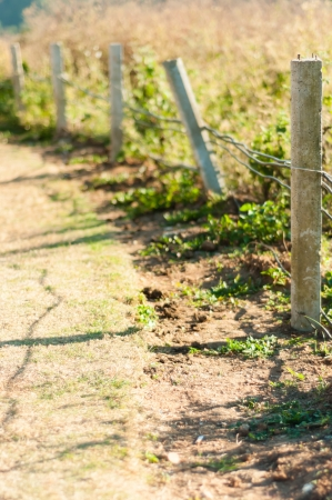 bearded wires: Barbed wire fence with grass in field Stock Photo