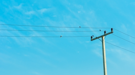 Electricity post in blue sky with four bird hold on Electric cable Stock Photo