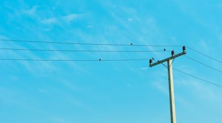 Elektriciteit post in blauwe hemel met vier vogel greep op Elektrische kabel Stockfoto