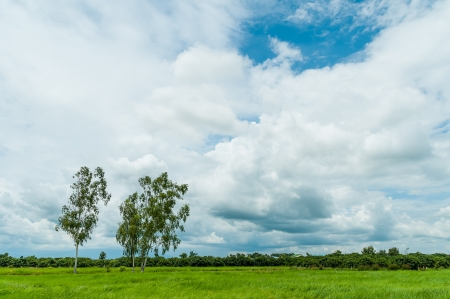 Tree in grass field with cloud and blue sky photo