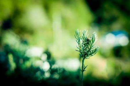 Groene plant groeien van grond op de grond Stockfoto - 14739866