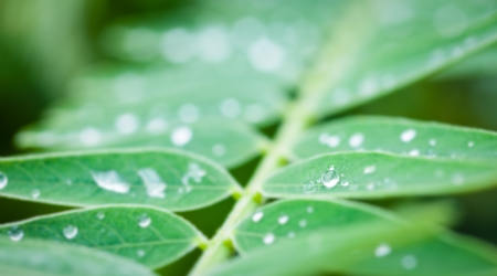 Close up drop of water on leaf with bokeh