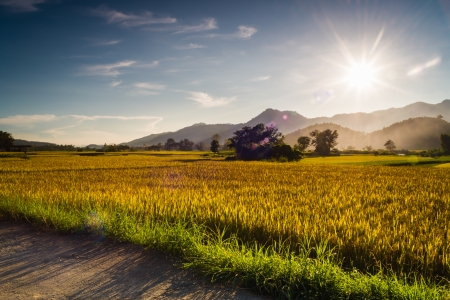 Sunset behind the mountains in the rice field with lens flare effect photo
