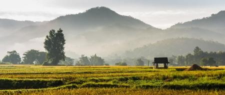 silhouet hut in rijst veld in de ochtend de tijd in thailand