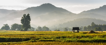 silhouette hut in rice field in morning time in thailand