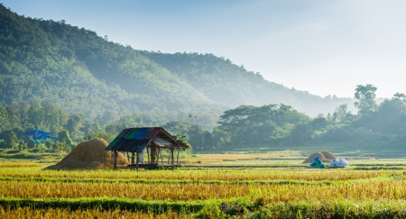 hut in rice field in morning time in thailand Stock Photo