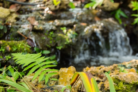 green leaf on ground of stone with waterfall in background Stock Photo