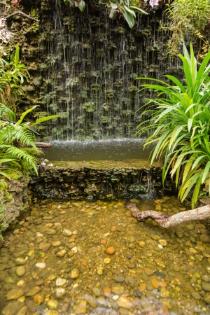 waterfall in garden with green plant