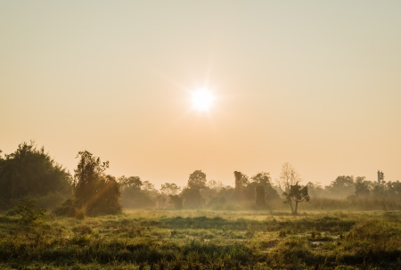 tree in grass field with sunrise and fog in morning time