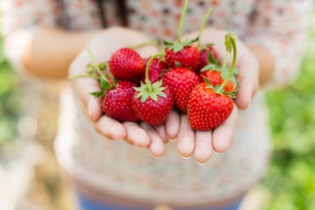 woman showing red strawberry on hands in farm