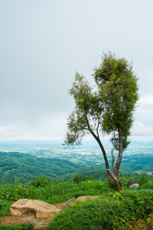 tree on mountain and overcast sky