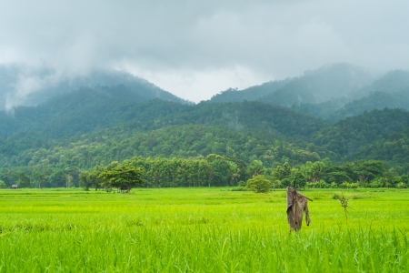 landscape of rice farm in thailand in raining day Stock Photo