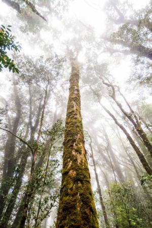 green tree rainforest in autumn season of thailand Stock Photo
