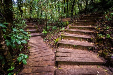 wood pathway in rainforest of thailand Stock Photo