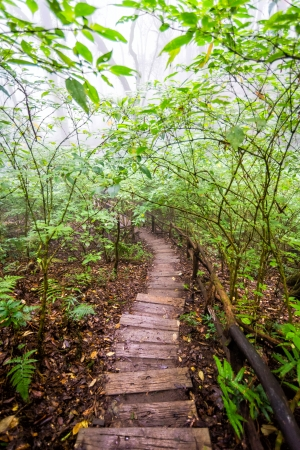wood pathway in rainforest of thailand photo