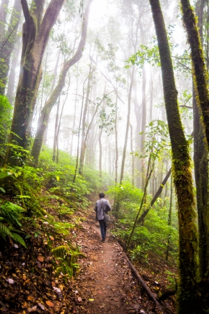 man walking on pathway in rainforest of thailand