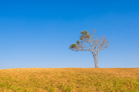 broad leaf: tree on hill and grass field with blue sky in background Stock Photo