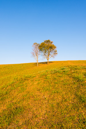 tree on hill and grass field with blue sky in background Stock Photo
