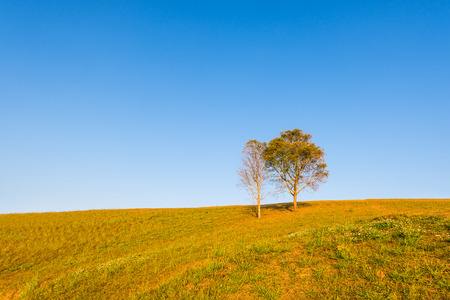 tree on hill and grass field with blue sky in background photo