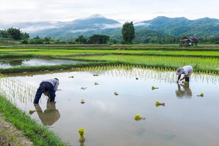 boer in de bergen landbouw mist nevelig gebied rijst in de achtergrond in de ochtend de tijd in Thailand