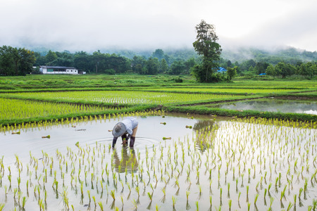 boer in veld rijst landbouw mist mistige berg op de achtergrond in de ochtend tijd in thailand