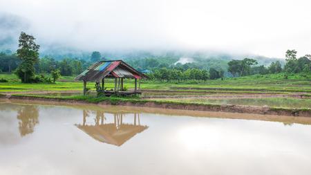oude hut in veld rijst boerderij mist en berg in de achtergrond van thailand in de ochtend tijd