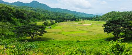 panoramalandschap van het groene gebied van het rijstlandbouwbedrijf met berg en boom in dag lichte tijd in Thailand