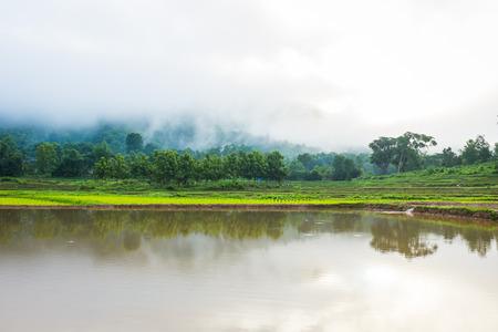 boom in het rijstveld mist mistig en bergen op de achtergrond 's ochtends tijd in Thailand