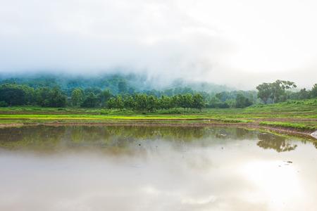 boom in rijstveld mist misty en berg in de achtergrond ochtend tijd in Thailand Stockfoto