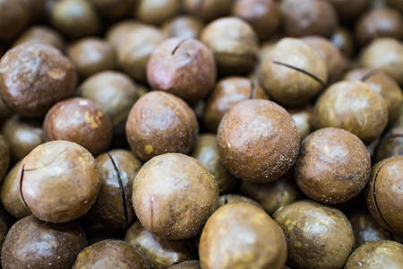 closeup macadamia nuts with nature light