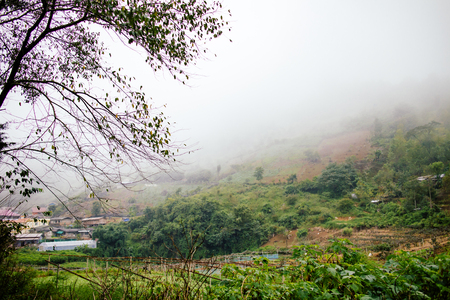 countryside in thailand with misty early fog in morning time
