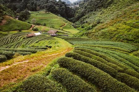 Groene thee boerderij op hoge berg in Thailand met hut