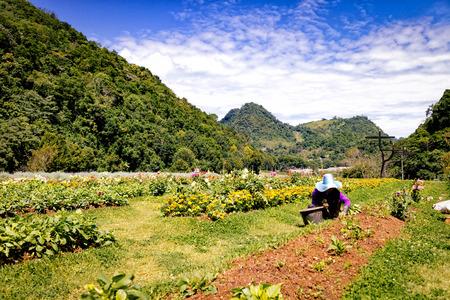 farmer woking in flower garden in day time