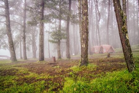 tent op de camping bos met mistige mist reizen in Thailand Stockfoto