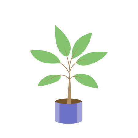 Drawn houseplant in a pot. Green leaves. Vector isolated illustration.