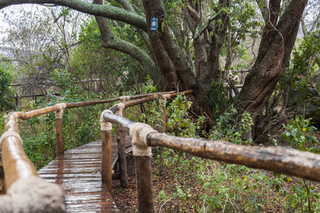 tree linked: The secondary way in the rainforests. It goes through the centuries old wooden tree. The bridge that was made by people from the possible dangers linked protects ropes from the ground.