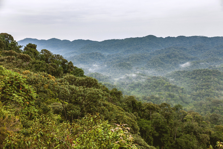 fantastic view: The view of rainforests. It creates a fantastic view with foggy and cloudy sky.