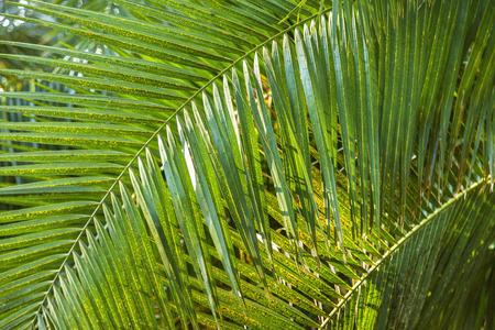 clima tropical: La palmera en las selvas tropicales. Me crece en clima tropical. Cuenta con una bonita vista y est�ticamente.