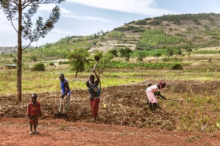 Kibuye, Ruanda, Africa - 11 settembre 2015: Sconosciuto gli operai africani. Le donne che lavorano nei campi portano i loro figli e lavorano.