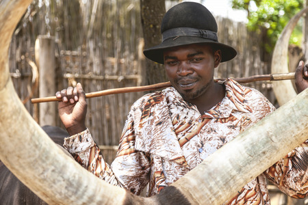 sitter: Ankole Watusi Museum, Rwanda, Africa - September 9, 2015: Unidentified man. The shepherd of Ankole-Watusi. He is leading the cows by not using stick but only whistling. Editorial