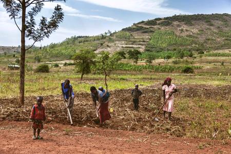 Kibuye, Ruanda, Africa - 11 Settembre, 2015: sconosciuto ai lavoratori africani. Questo donne che trasportano il suo bambino sulla schiena lavori in campo a.