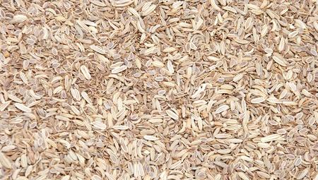 foeniculum vulgare: Fennel Seeds