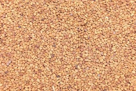 fenugreek: Stored Fenugreek Seeds