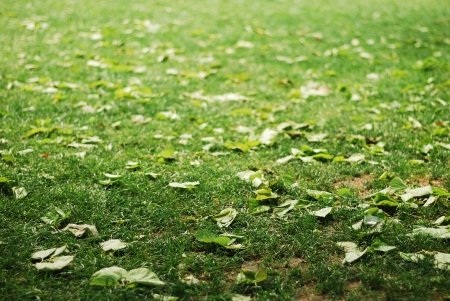 greengrass: Fallen leaves on a bright greengrass